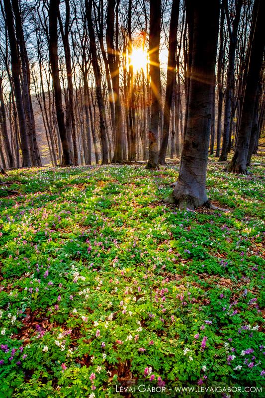 Tavaszi hajnal a Zengő hegyen