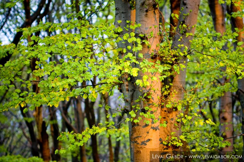 Erdő-részlet